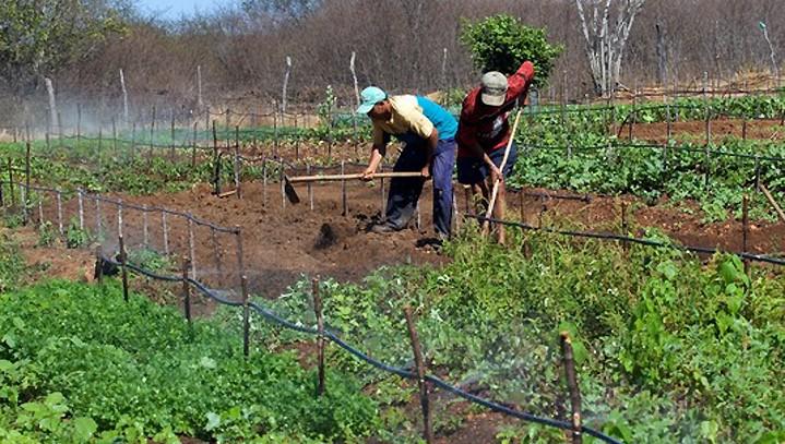 Pequena propriedade rural é impenhorável mesmo se for garantia de empréstimo